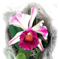 Орхидея :: Alexander Demetev