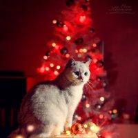 С наступающим Новым годом! :: Elena Klimova