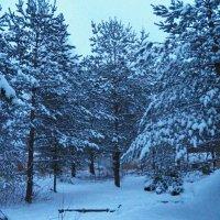 Зимняя сказка вечерняя :: Регина Пупач