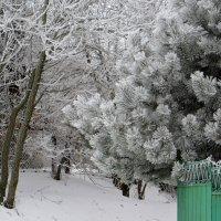 Предновогодний день :: Татьяна Смоляниченко