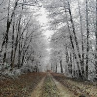 Лес... зима.. тропа.. :: Эдвард Фогель