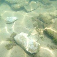 Отдых на море, Крым. Скнорлинг. Подводные пейзажи-18. :: Руслан Грицунь