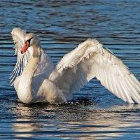 Ангел на воде :: Alexander Andronik