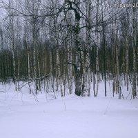 утро нового года.... :: александр дмитриев