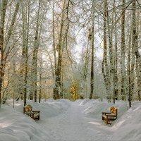 Двое в зимнем парке... :: Александр Никитинский