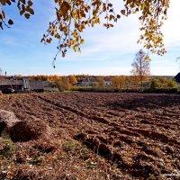 Деревня Клястицы. Осень :: Андрей Буховецкий