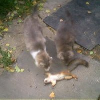 Коты и белка :: Maikl Smit