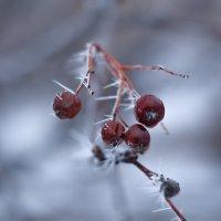 Зима :: Сергей Терещенко