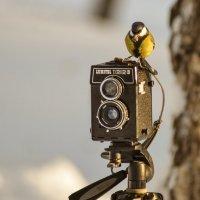 Птичка, которая всегда вылетала, но мы ее не видели :: cfysx
