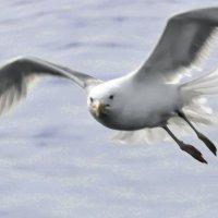 Чайки :: Андрей Мартюшев