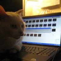 Кошка вышла на беговую дорожку... :: Алекс Аро Аро