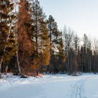 лыжная прогулка 2 января :: Яна Старковская