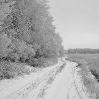 Зимнее утро... :: владимир