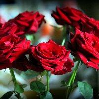 цветочные истории-алые розы :: Олег Лукьянов