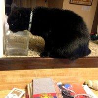 Натюрморт с пьющей кошкой... :: Елена