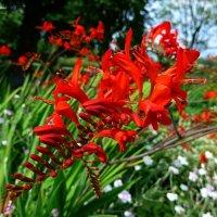 Красные цветы :: Nina Yudicheva