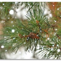 А снег,идет..... :: Paparazzi