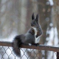 На заборе :: Alex Bush