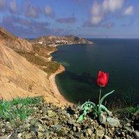 Найди свой аленький и сказочный цветочек... :: viton