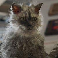 Фото зарисовки с выставки кошек :: Эдуард Куклин