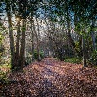 Тайны Нормандского леса :: Alena Kramarenko