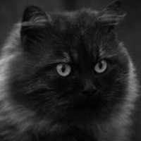 Старый кот :: Вадим Лапин