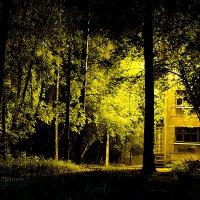 В парке ночью..... :: Петр Панков