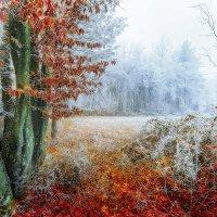 Зимний лес :: Sven Rok