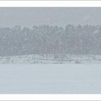Снегопад :: Михаил Цегалко