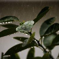 Застывшая музыка дождя... :: алексей афанасьев