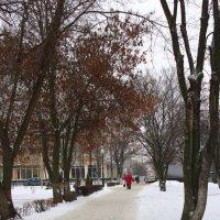 Зимний парк,зимний парк........ :: Анна Шишалова