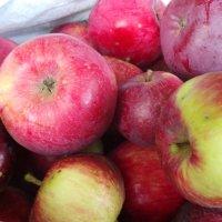 Наливные яблочки :: Валентина Юшкова