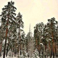 Зимний лес. :: Михаил Столяров