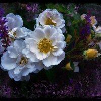 Нежное очарование белых роз :: Nina Yudicheva