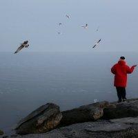 Море, чайки :: Анатолий