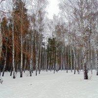 "Серия ""Зима ""...№1 :: Мила Бовкун"