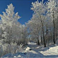 Зимний наряд :: Leonid Rutov