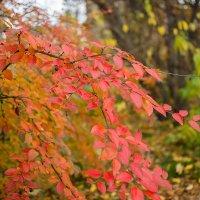 Осень в Мурманске :: Иваннович *