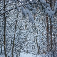 « Я иду по тропинке лесной, По дороге любуюсь красой….» :: Андрей Нибылица