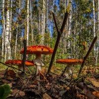Трое вышли из леса :: Андрей Дворников