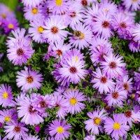 цветы :: Александр Калинкин