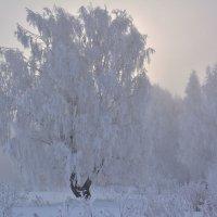 Морозный рассвет :: Геннадий Ячменев