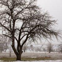 зимушка-зима :: Наталия Сарана