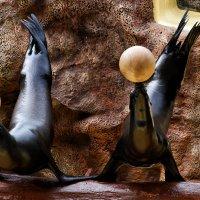 Усы уж седые, а все в мячик играются :: Valeriy(Валерий) Сергиенко