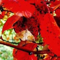 среди осенних листьев :: Александр Прокудин
