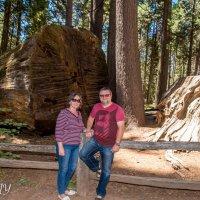 Big Trees of California. :: Leonid