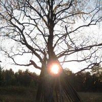 Солнце в шалаше :: Алексей Хохлов