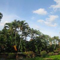 Пригород Бангкока. Аютхая. :: Лариса (Phinikia) Двойникова