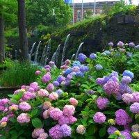 Парк цветов в Гамбурге (серия). У водопадов :: Nina Yudicheva
