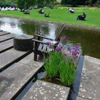 Парк цветов в Гамбурге (серия). Отдых у воды :: Nina Yudicheva